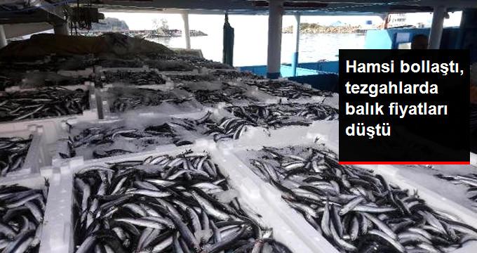 Hamsi bollaştı, tezgahlarda balık fiyatları düştü